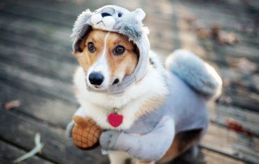 Doenças Respiratórias em cachorro e gato no inverno.